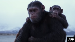 لقطة من فيلم 'War for the Planet Of The Apes'